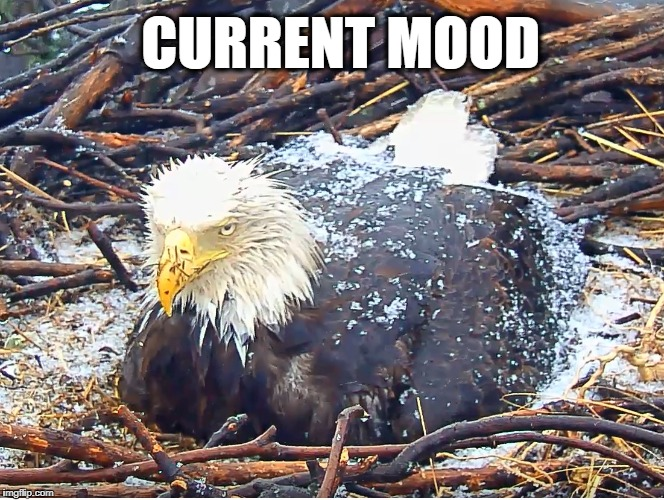 CURRENT MOOD | image tagged in liberty,justice,eaglecam,bald eagle,current mood,grumpy eagle | made w/ Imgflip meme maker