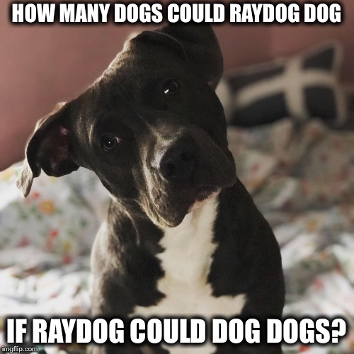 HOW MANY DOGS COULD RAYDOG DOG IF RAYDOG COULD DOG DOGS? | image tagged in raydog a darkside,raydog,memes | made w/ Imgflip meme maker