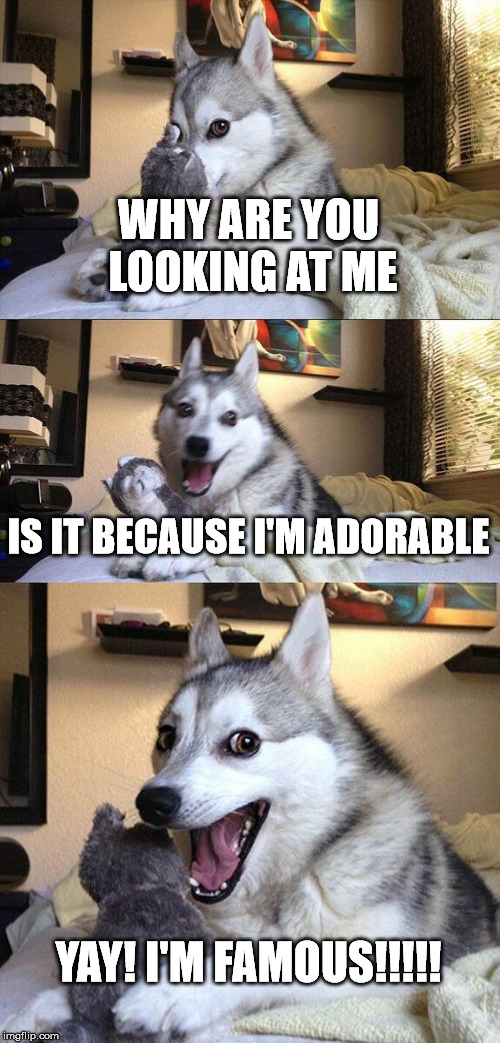 Bad Pun Dog Meme | WHY ARE YOU LOOKING AT ME IS IT BECAUSE I'M ADORABLE YAY! I'M FAMOUS!!!!! | image tagged in memes,bad pun dog | made w/ Imgflip meme maker