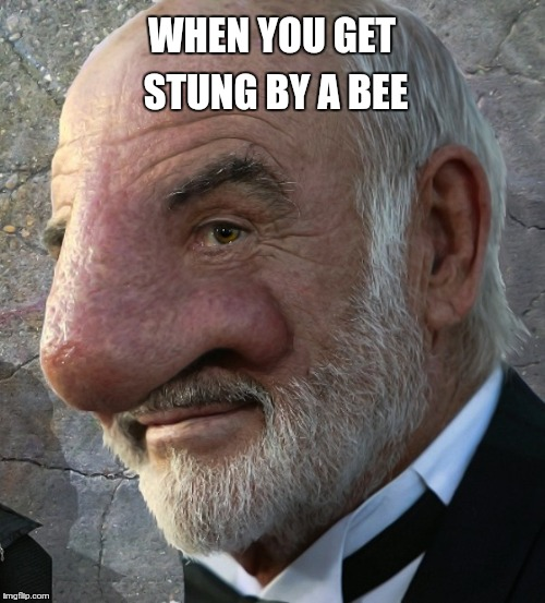 Sean Connery nose close up | WHEN YOU GET STUNG BY A BEE | image tagged in sean connery nose close up | made w/ Imgflip meme maker
