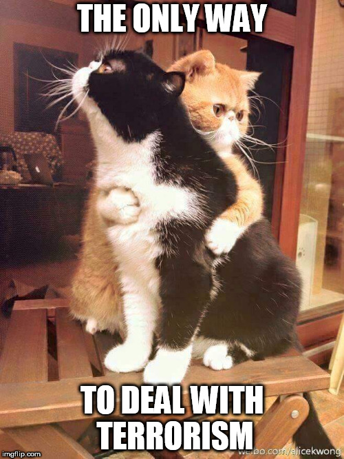 cats hugging | THE ONLY WAY TO DEAL WITH TERRORISM | image tagged in cats hugging,peace,love,terrorism,peace and love,hug | made w/ Imgflip meme maker