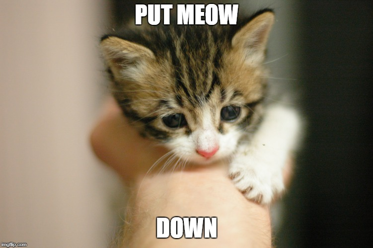 PUT MEOW DOWN | image tagged in sad kitten | made w/ Imgflip meme maker