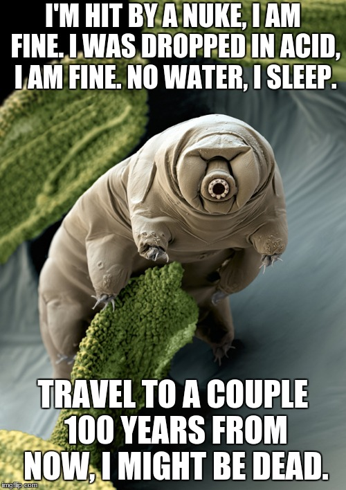 I'M HIT BY A NUKE, I AM FINE. I WAS DROPPED IN ACID, I AM FINE. NO WATER, I SLEEP. TRAVEL TO A COUPLE 100 YEARS FROM NOW, I MIGHT BE DEAD. | image tagged in tardigrades | made w/ Imgflip meme maker