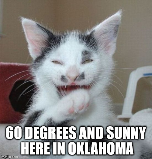 Laughing Cat 2 | 60 DEGREES AND SUNNY HERE IN OKLAHOMA | image tagged in laughing cat 2 | made w/ Imgflip meme maker