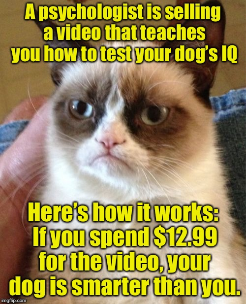 Are you smarter than a Labrador? | A psychologist is 