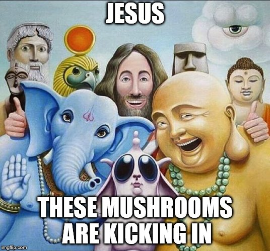 magic mushrooms | JESUS THESE MUSHROOMS ARE KICKING IN | image tagged in religions common ground | made w/ Imgflip meme maker