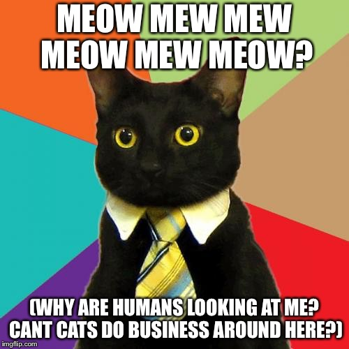 Business Cat | MEOW MEW MEW MEOW MEW MEOW? (WHY ARE HUMANS LOOKING AT ME? CANT CATS DO BUSINESS AROUND HERE?) | image tagged in memes,business cat,roblox item,roblox,this is not roblox,roblox business cat irl | made w/ Imgflip meme maker