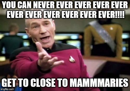Picard Wtf Meme | YOU CAN NEVER EVER EVER EVER EVER EVER EVER EVER EVER EVER EVER!!!! GET TO CLOSE TO MAMMMARIES | image tagged in memes,picard wtf | made w/ Imgflip meme maker