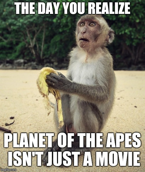 What Kind of Planet Is This?! | THE DAY YOU REALIZE PLANET OF THE APES ISN'T JUST A MOVIE | image tagged in planet of the apes,funny memes,monkey,banana,surprised face | made w/ Imgflip meme maker