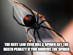 Death Penalty for Killing Spiders | THE BEST LAW EVER KILL A SPIDER GET THE DEATH PENALTY IF YOU SURVIVE THE SPIDER | image tagged in spiders | made w/ Imgflip meme maker