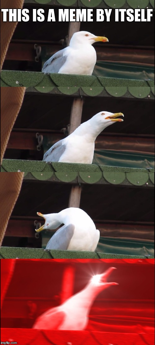 Inhaling Seagull Meme | THIS IS A MEME BY ITSELF | image tagged in memes,inhaling seagull | made w/ Imgflip meme maker