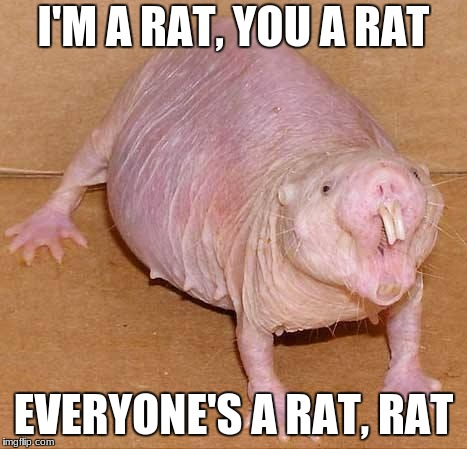 naked mole rat | I'M A RAT, YOU A RAT EVERYONE'S A RAT, RAT | image tagged in naked mole rat | made w/ Imgflip meme maker