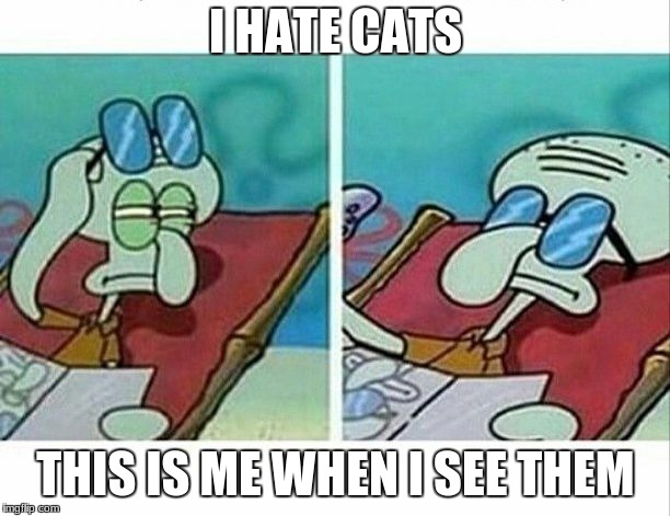 Squidward sees you and doesn't care | I HATE CATS THIS IS ME WHEN I SEE THEM | image tagged in squidward sees you and doesn't care | made w/ Imgflip meme maker