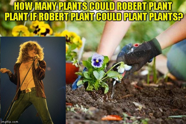 Credit to coollew for inspiration! | HOW MANY PLANTS COULD ROBERT PLANT PLANT IF ROBERT PLANT COULD PLANT PLANTS? | image tagged in memes,coollew,powermetalhead,led zeppelin,plants,rock music | made w/ Imgflip meme maker