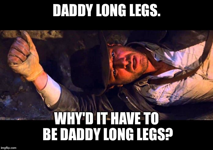 Daddy Long Legs |  DADDY LONG LEGS. WHY'D IT HAVE TO BE DADDY LONG LEGS? | image tagged in indiana jones why'd it have to be snakes,daddy long legs,phobia,spiders,insects,fear | made w/ Imgflip meme maker