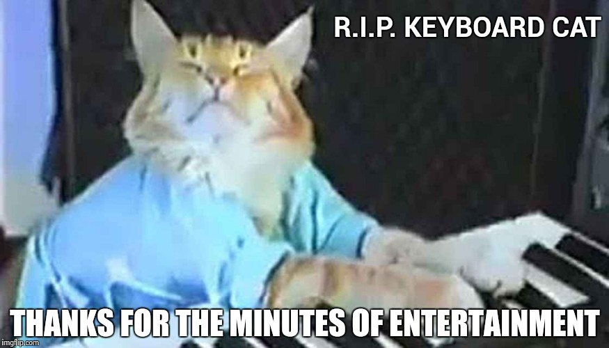 How will I amuse myself now | R.I.P. KEYBOARD CAT THANKS FOR THE MINUTES OF ENTERTAINMENT | image tagged in keyboard cat,pussy,music,youtube,grumpy cat star wars | made w/ Imgflip meme maker