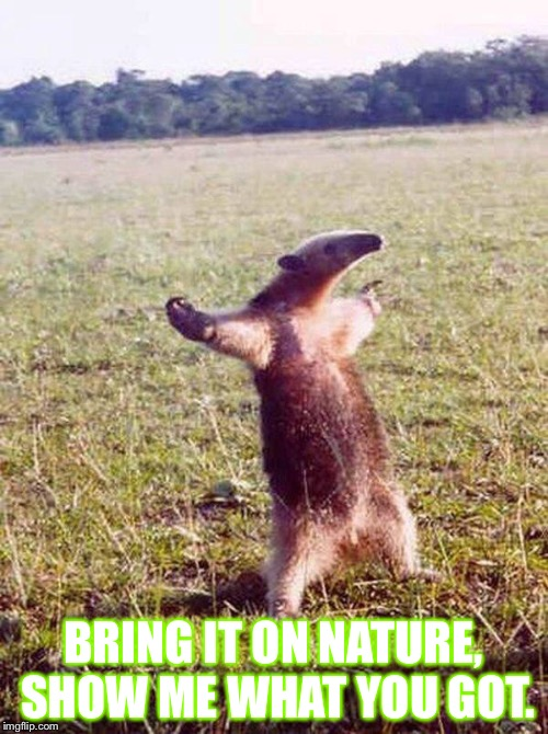 Fight me anteater | BRING IT ON NATURE, SHOW ME WHAT YOU GOT. | image tagged in fight me anteater | made w/ Imgflip meme maker