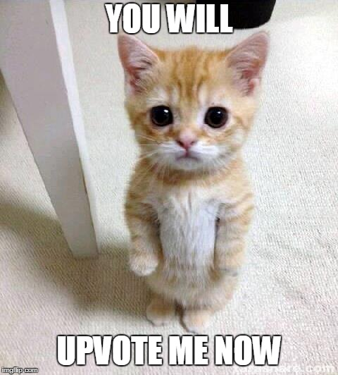 Upvote me now | YOU WILL UPVOTE ME NOW | image tagged in memes,cute cat,funny,imgflip,upvote | made w/ Imgflip meme maker