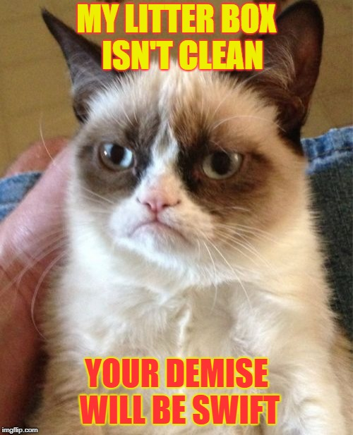 Grumpy Cat Meme | MY LITTER BOX  ISN'T CLEAN YOUR DEMISE WILL BE SWIFT | image tagged in memes,grumpy cat | made w/ Imgflip meme maker