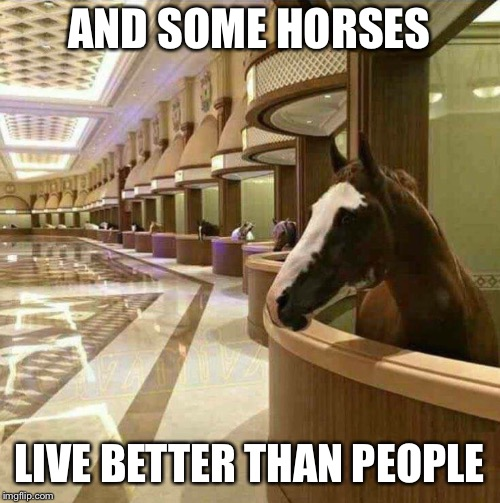 AND SOME HORSES LIVE BETTER THAN PEOPLE | made w/ Imgflip meme maker