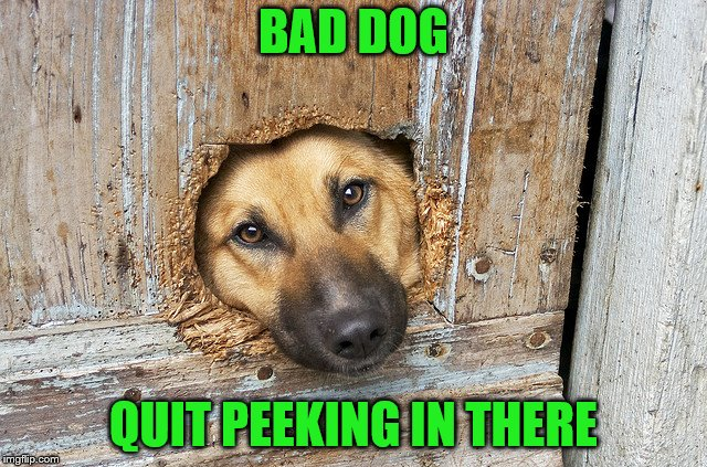 BAD DOG QUIT PEEKING IN THERE | made w/ Imgflip meme maker