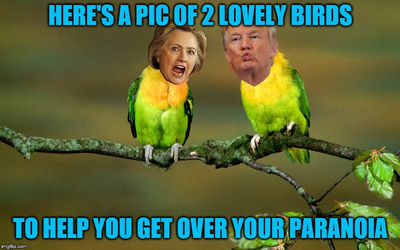 HERE'S A PIC OF 2 LOVELY BIRDS TO HELP YOU GET OVER YOUR PARANOIA | made w/ Imgflip meme maker