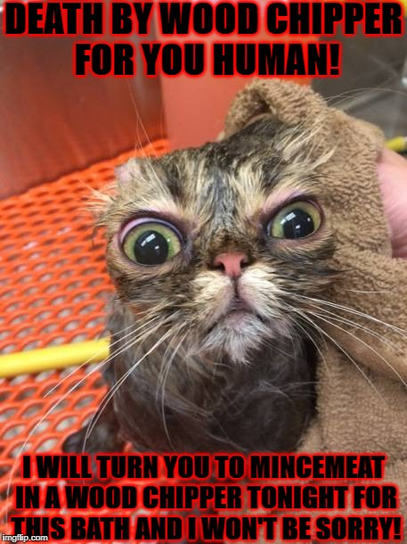 DEATH BY WOOD CHIPPER FOR YOU HUMAN! I WILL TURN YOU TO MINCEMEAT IN A WOOD CHIPPER TONIGHT FOR THIS BATH AND I WON'T BE SORRY! | image tagged in i'll kill you | made w/ Imgflip meme maker