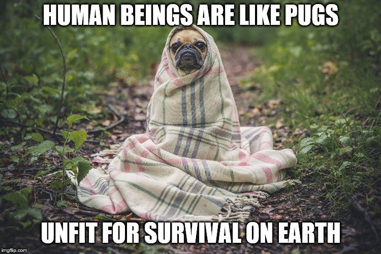 Humanity  |  HUMAN BEINGS ARE LIKE PUGS; UNFIT FOR SURVIVAL ON EARTH | image tagged in pugs,humans,earth,survival,pug life | made w/ Imgflip meme maker