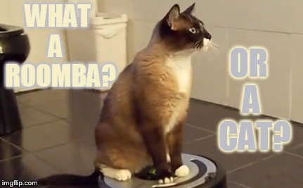 WHAT A   ROOMBA? OR  A   CAT? | made w/ Imgflip meme maker