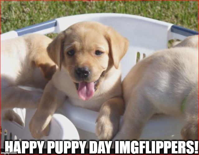 Happy Puppy Day! | HAPPY PUPPY DAY IMGFLIPPERS! | image tagged in holidays,happy holidays | made w/ Imgflip meme maker
