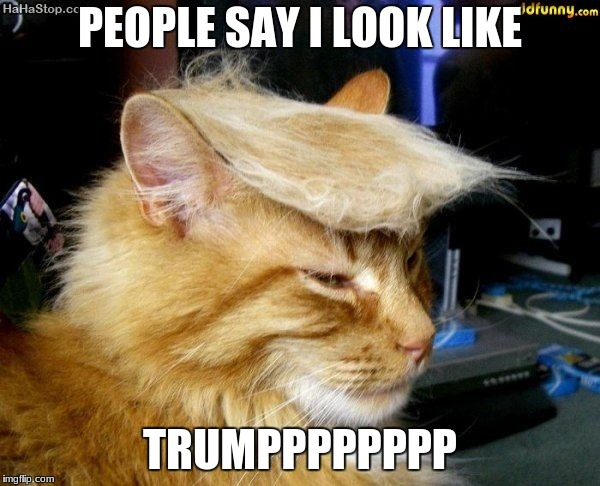donald trump cat |  PEOPLE SAY I LOOK LIKE; TRUMPPPPPPPP | image tagged in donald trump cat | made w/ Imgflip meme maker
