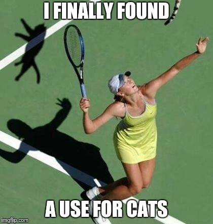 They stop howling after a couple of hits | I FINALLY FOUND A USE FOR CATS | image tagged in grumpy cat tennis,first world cat problems,not amused,bounce | made w/ Imgflip meme maker