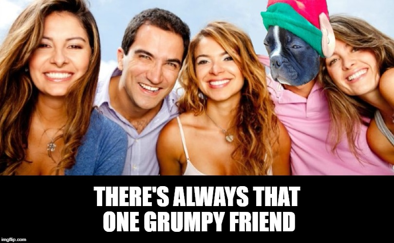 That One Friend | THERE'S ALWAYS THAT ONE GRUMPY FRIEND | image tagged in grumpy,friends,dogs | made w/ Imgflip meme maker