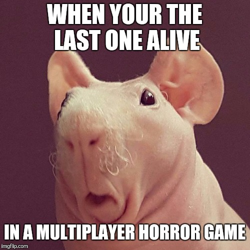 WHEN YOUR THE LAST ONE ALIVE IN A MULTIPLAYER HORROR GAME | image tagged in surprised bald rat | made w/ Imgflip meme maker
