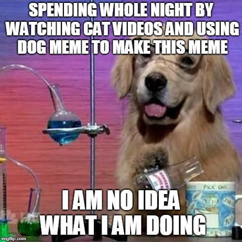 I Have No Idea What I Am Doing Dog Meme | SPENDING WHOLE NIGHT BY WATCHING CAT VIDEOS AND USING DOG MEME TO MAKE THIS MEME I AM NO IDEA WHAT I AM DOING | image tagged in memes,i have no idea what i am doing dog | made w/ Imgflip meme maker