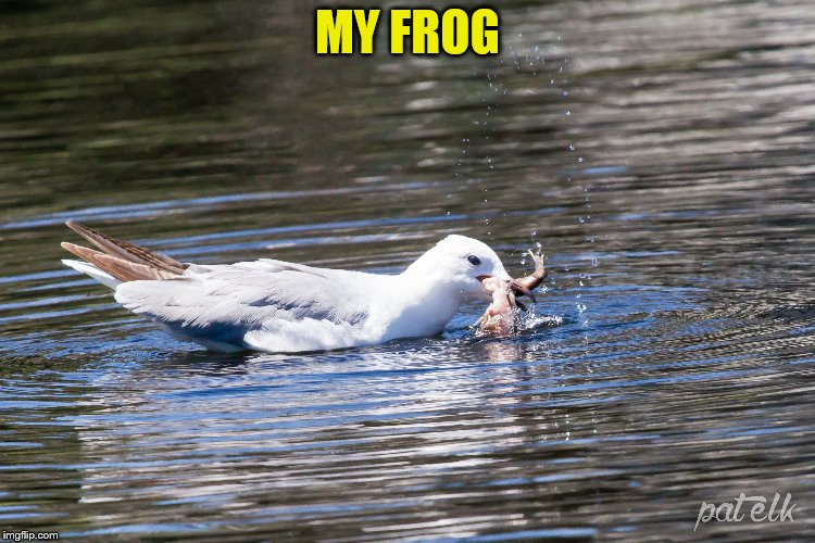 MY FROG | made w/ Imgflip meme maker