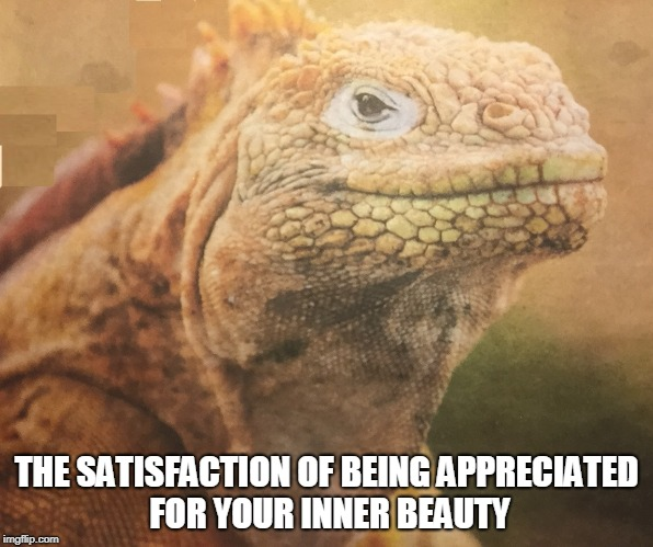 inner beauty iguana | THE SATISFACTION OF BEING APPRECIATED FOR YOUR INNER BEAUTY | image tagged in satisfaction | made w/ Imgflip meme maker