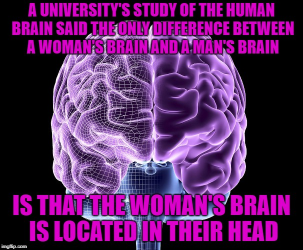 Where is your brain | A UNIVERSITY'S STUDY OF THE HUMAN BRAIN SAID THE ONLY DIFFERENCE BETWEEN A WOMAN'S BRAIN AND A MAN'S BRAIN IS THAT THE WOMAN'S BRAIN IS LOCA | image tagged in brains | made w/ Imgflip meme maker