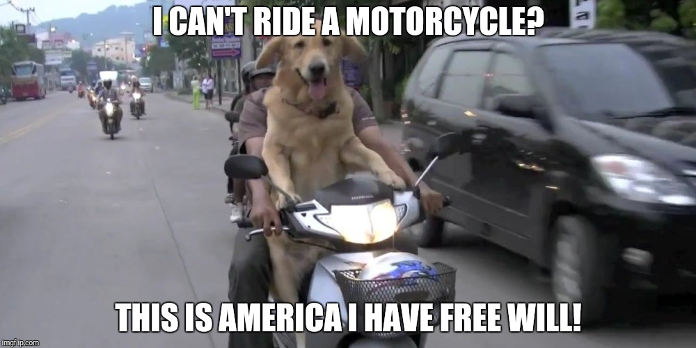 >insert title< | I CAN'T RIDE A MOTORCYCLE? THIS IS AMERICA I HAVE FREE WILL! | image tagged in dog | made w/ Imgflip meme maker