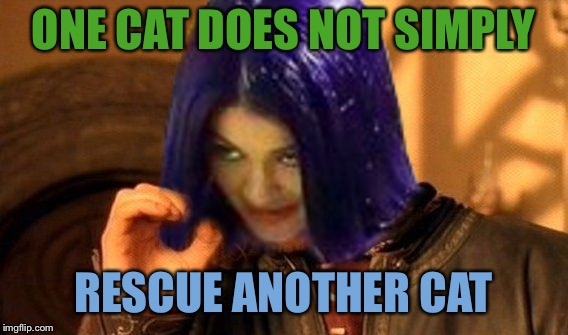 Kylie Does Not Simply | ONE CAT DOES NOT SIMPLY RESCUE ANOTHER CAT | image tagged in kylie does not simply | made w/ Imgflip meme maker