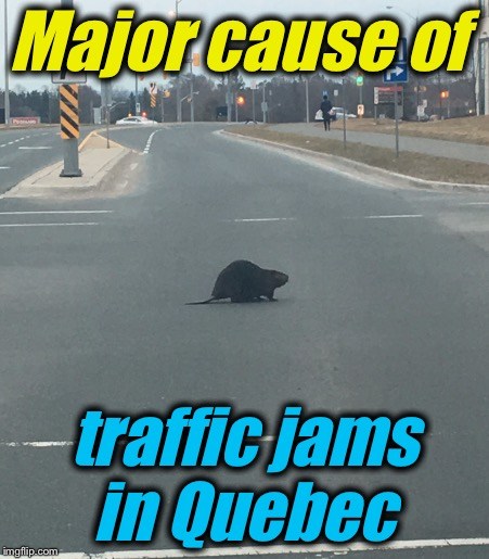 Major cause of traffic jams in Quebec | made w/ Imgflip meme maker