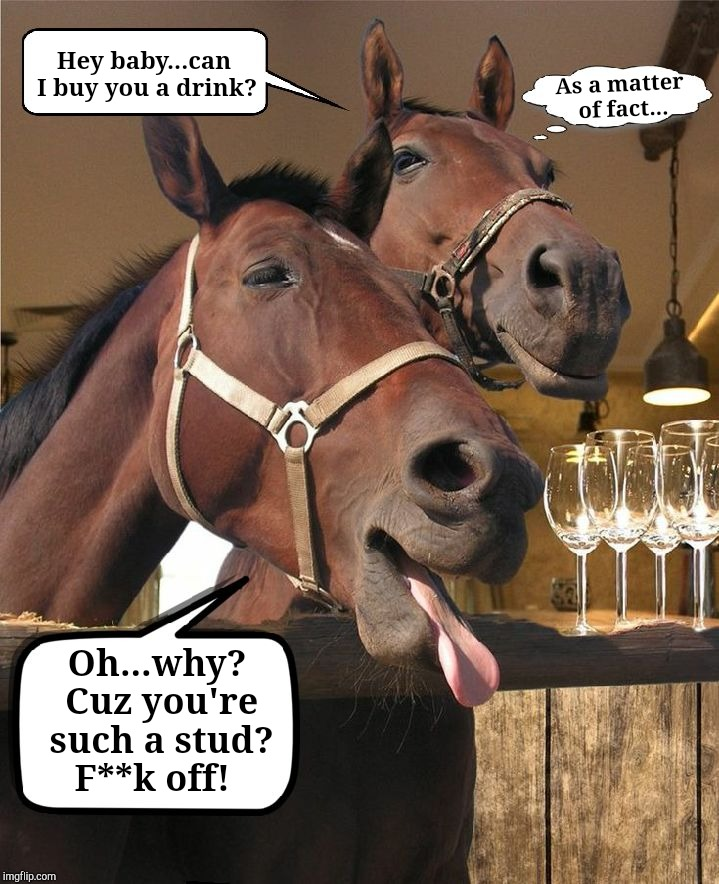 Out To Stud | Hey baby...can I buy you a drink? Oh...why? Cuz you're such a stud? F**k off! As a matter of fact... | image tagged in drunken horse,dank memes,drunk animals,my memes are dopest,i bring the funny | made w/ Imgflip meme maker