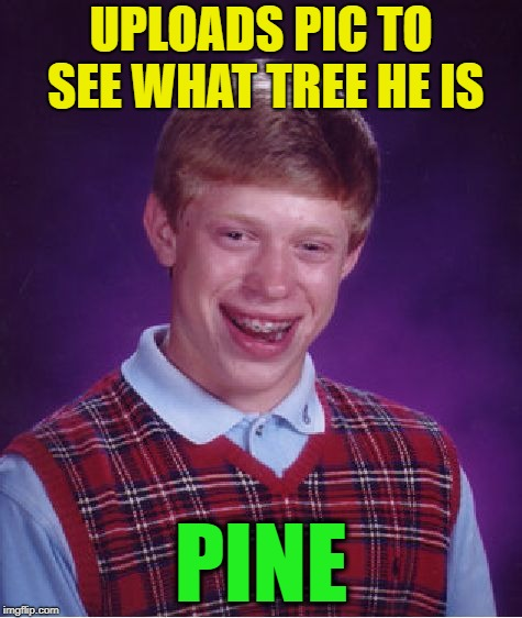 Bad Luck Brian Meme | UPLOADS PIC TO SEE WHAT TREE HE IS PINE | image tagged in memes,bad luck brian | made w/ Imgflip meme maker