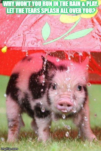 DMB #41 | WHY WON'T YOU RUN IN THE RAIN & PLAY, LET THE TEARS SPLASH ALL OVER YOU? | image tagged in dmb,dave matthews band,41,rain,pig,play | made w/ Imgflip meme maker