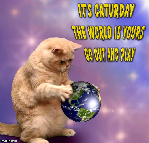 caturday play | image tagged in caturday,cats,cat,play,world,saturday | made w/ Imgflip meme maker