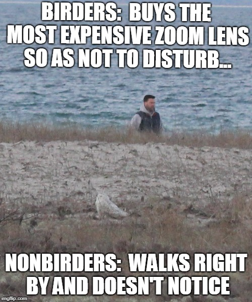BIRDERS:  BUYS THE MOST EXPENSIVE ZOOM LENS SO AS NOT TO DISTURB... NONBIRDERS:  WALKS RIGHT BY AND DOESN'T NOTICE | image tagged in oblivious | made w/ Imgflip meme maker