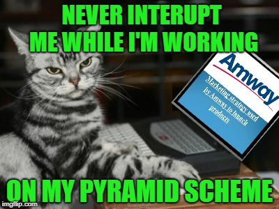 Computer Cat Scheme  | NEVER INTERUPT ME WHILE I'M WORKING ON MY PYRAMID SCHEME | image tagged in cat computer,amway salesman,caturday,funny memes | made w/ Imgflip meme maker