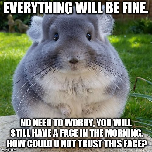 the cute ones are the ones to NOT trust | EVERYTHING WILL BE FINE. NO NEED TO WORRY, YOU WILL STILL HAVE A FACE IN THE MORNING. HOW COULD U NOT TRUST THIS FACE? | image tagged in chinchilla,nomoreface,good night | made w/ Imgflip meme maker