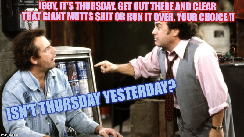 louieith n iggith | IGGY, IT'S THURSDAY. GET OUT THERE AND CLEAR THAT GIANT MUTTS SHIT OR RUN IT OVER, YOUR CHOICE !! ISN'T THURSDAY YESTERDAY? | image tagged in louieith n iggith | made w/ Imgflip meme maker