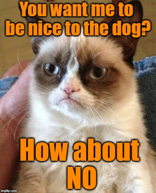 """Kiss my azz"" week (A Grumpy Cat event) 